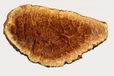 goldfield maserknollen 1 5 kg preis pro kg hobbyholz mark. Black Bedroom Furniture Sets. Home Design Ideas